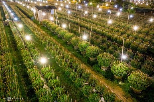 Khung cảnh rực rỡ ở làng hoa chong đèn chuẩn bị vụ hoa Tết - Ảnh 6.