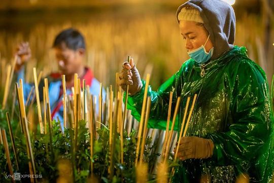 Khung cảnh rực rỡ ở làng hoa chong đèn chuẩn bị vụ hoa Tết - Ảnh 8.