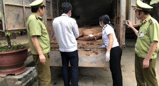 Giá thịt heo tăng sốc, địa phương nói không xuất lậu heo sang Trung Quốc - Ảnh 1.