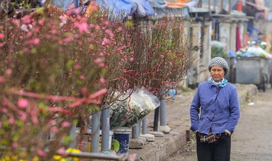 Đào Nhật Tân nở rộ, nhiều tuyến phố Hà Nội ngập tràn sắc xuân - Ảnh 2.