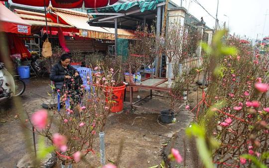 Đào Nhật Tân nở rộ, nhiều tuyến phố Hà Nội ngập tràn sắc xuân - Ảnh 4.