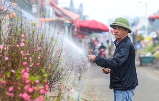 Đào Nhật Tân nở rộ, nhiều tuyến phố Hà Nội ngập tràn sắc xuân - Ảnh 5.