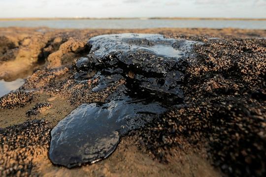 """4.400 km bờ biển Brazil chết tức tưởi vì """"thủy triều đen"""" bí ẩn - Ảnh 3."""