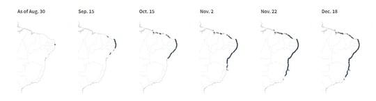 """4.400 km bờ biển Brazil chết tức tưởi vì """"thủy triều đen"""" bí ẩn - Ảnh 5."""