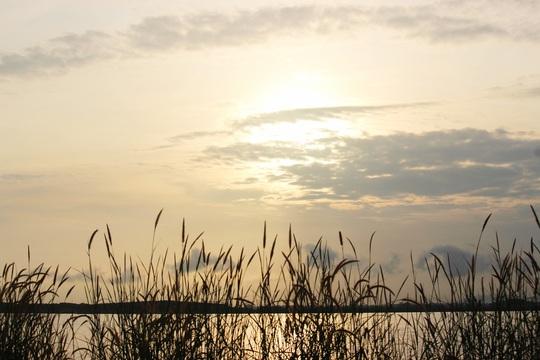 Về Trị An nghe bàn tay thơm mùi cỏ lau - Ảnh 11.