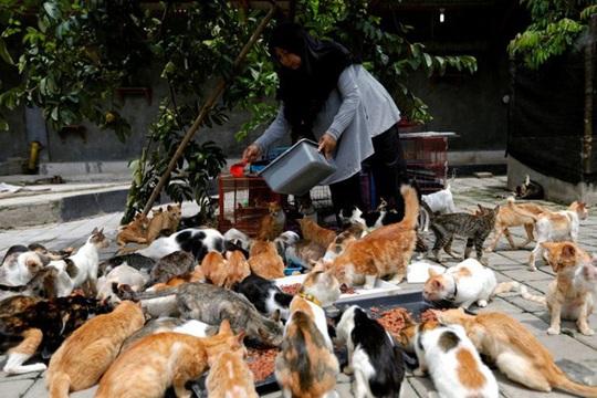 Bà nội trợ xây mái ấm cho 250 con mèo bị bỏ rơi - Ảnh 1.