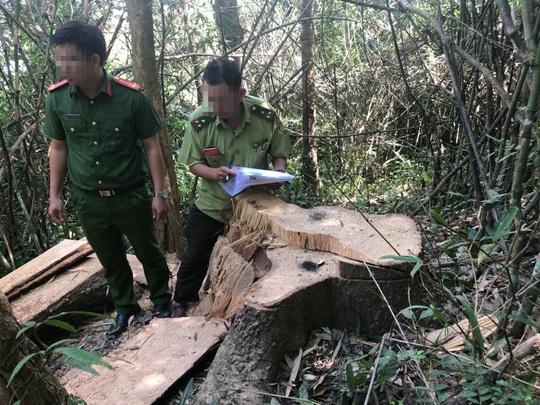 Một vụ phá rừng, sở báo 3,5m3, hạt nói 28m3, công an xác định 41m3 ! - Ảnh 3.