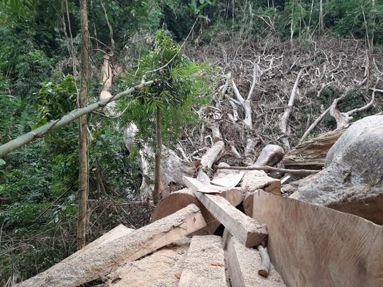 Một vụ phá rừng, sở báo 3,5m3, hạt nói 28m3, công an xác định 41m3 ! - Ảnh 5.