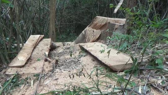Một vụ phá rừng, sở báo 3,5m3, hạt nói 28m3, công an xác định 41m3 ! - Ảnh 6.