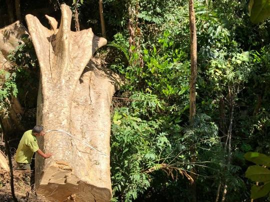 Một vụ phá rừng, sở báo 3,5m3, hạt nói 28m3, công an xác định 41m3 ! - Ảnh 1.