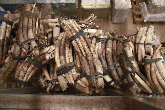 Uganda bắt 2 công dân Việt buôn lậu ngà voi, vảy tê tê - Ảnh 1.