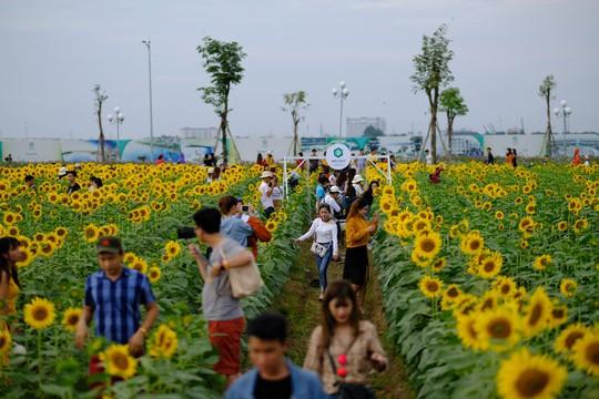 Tác giả vườn hoa hướng dương gây sốt ở TP HCM kể chuyện khởi nghiệp - Ảnh 4.