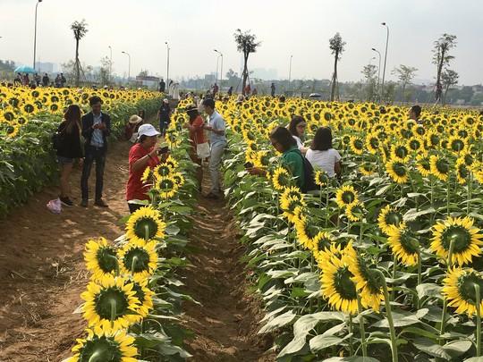 Tác giả vườn hoa hướng dương gây sốt ở TP HCM kể chuyện khởi nghiệp - Ảnh 1.