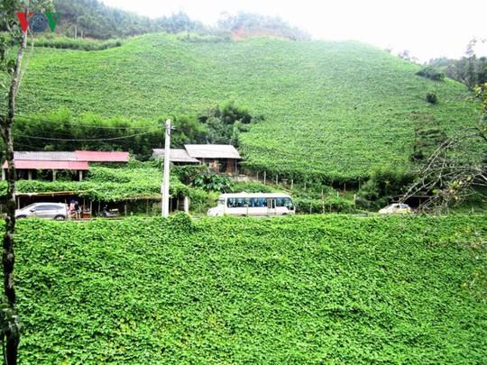 Du xuân Ô Quy Hồ - cung đèo huyền thoại ở vùng cao Tây Bắc - Ảnh 9.