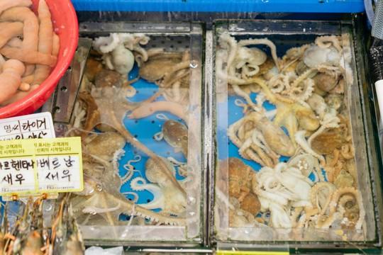 Khám phá khu chợ hải sản lớn nhất Seoul - Ảnh 9.