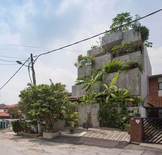Ngôi nhà như rừng nhiệt đới với hơn 40 loại cây - Ảnh 2.