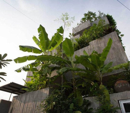 Ngôi nhà như rừng nhiệt đới với hơn 40 loại cây - Ảnh 3.