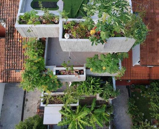 Ngôi nhà như rừng nhiệt đới với hơn 40 loại cây - Ảnh 8.