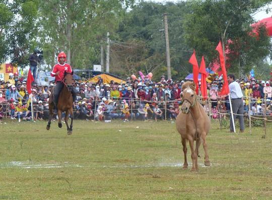 Sặc cười với các pha đua ngựa thồ Phú Yên - Ảnh 3.