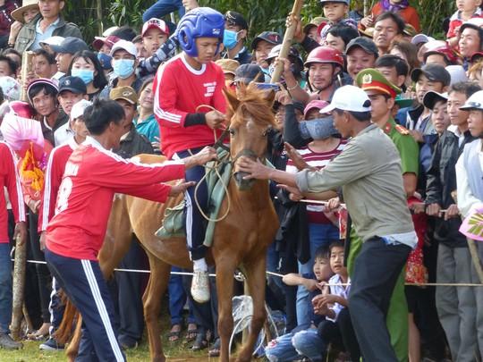 Sặc cười với các pha đua ngựa thồ Phú Yên - Ảnh 5.