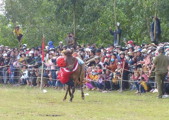 Sặc cười với các pha đua ngựa thồ Phú Yên - Ảnh 7.