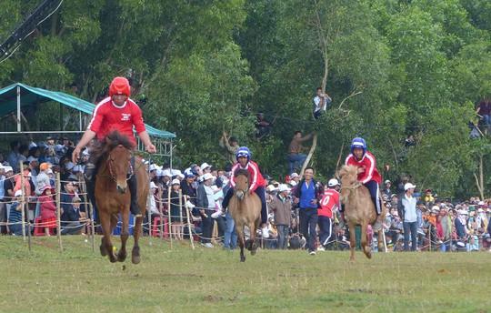 Sặc cười với các pha đua ngựa thồ Phú Yên - Ảnh 1.