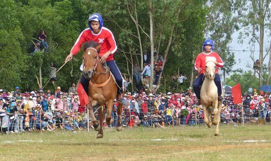 Sặc cười với các pha đua ngựa thồ Phú Yên - Ảnh 2.