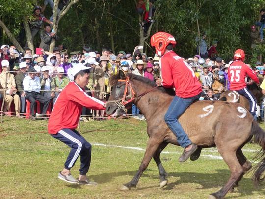 Sặc cười với các pha đua ngựa thồ Phú Yên - Ảnh 6.