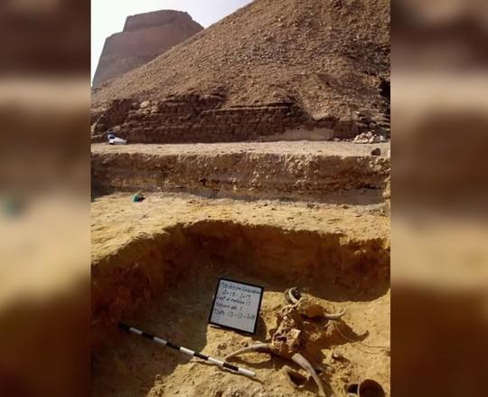 Thiếu nữ bí ẩn nằm bên đôi bò mộng trong mộ cổ Ai Cập - Ảnh 2.