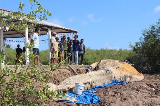 Dân kéo đến xem xác cá voi khủng trôi vào bờ, đang phân hủy nặng - Ảnh 1.