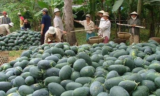Trung Quốc tự trồng dưa hấu quy mô lớn - Ảnh 1.