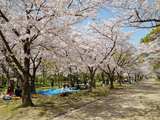 Ba thành phố có mùa hoa anh đào nổi tiếng nhất thế giới - Ảnh 7.