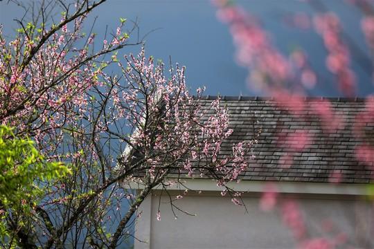 Thiên đường hoa đào đẹp chẳng kém Nhật Bản, Hàn Quốc là đây chứ đâu - Ảnh 2.