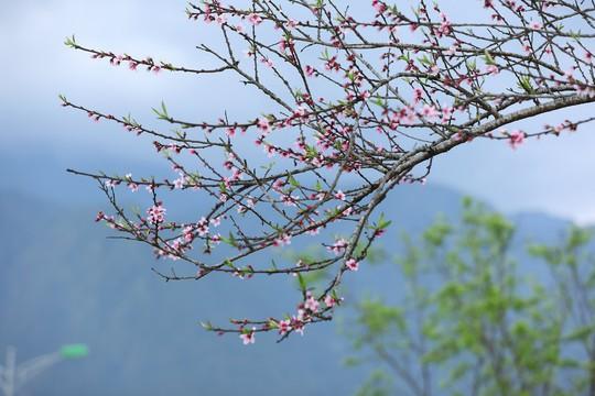 Thiên đường hoa đào đẹp chẳng kém Nhật Bản, Hàn Quốc là đây chứ đâu - Ảnh 3.