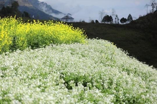 Thiên đường hoa đào đẹp chẳng kém Nhật Bản, Hàn Quốc là đây chứ đâu - Ảnh 6.