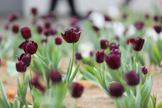 Thiên đường hoa đào đẹp chẳng kém Nhật Bản, Hàn Quốc là đây chứ đâu - Ảnh 7.