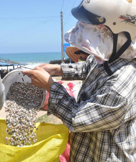 Quảng Ngãi: Ốc bé tẹo nhưng mang tiền triệu cho ngư dân - Ảnh 10.