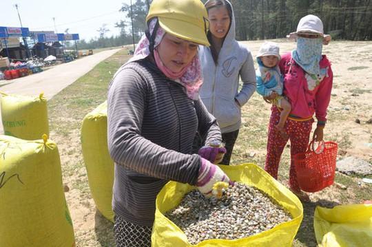 Quảng Ngãi: Ốc bé tẹo nhưng mang tiền triệu cho ngư dân - Ảnh 11.
