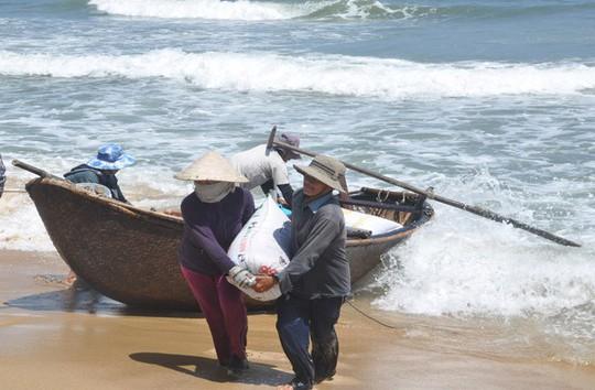 Quảng Ngãi: Ốc bé tẹo nhưng mang tiền triệu cho ngư dân - Ảnh 3.