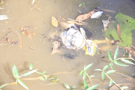 Bất ngờ bọt nổi trắng kênh, nước chảy đến đâu cá chết đến đó - Ảnh 5.