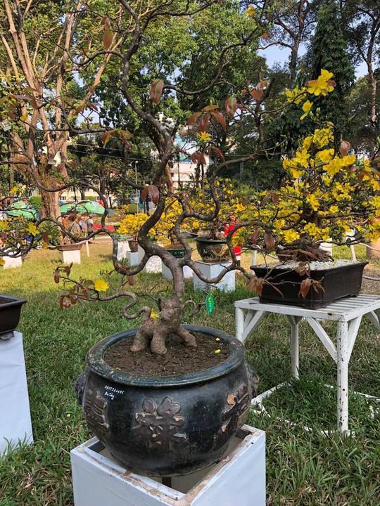 Mãn nhãn với kỳ hoa dị thảo tại Hội Hoa Xuân Tao Đàn - Ảnh 12.