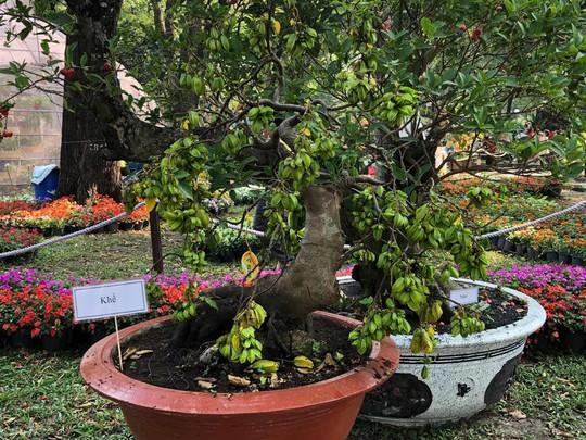 Mãn nhãn với kỳ hoa dị thảo tại Hội Hoa Xuân Tao Đàn - Ảnh 18.