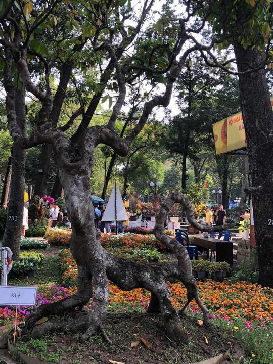 Mãn nhãn với kỳ hoa dị thảo tại Hội Hoa Xuân Tao Đàn - Ảnh 17.