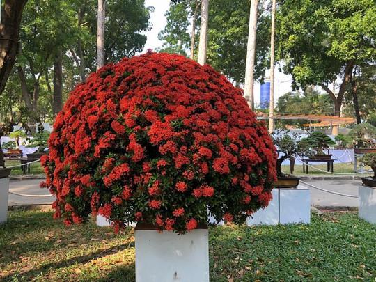 Mãn nhãn với kỳ hoa dị thảo tại Hội Hoa Xuân Tao Đàn - Ảnh 14.