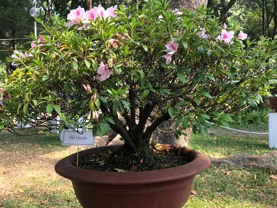 Mãn nhãn với kỳ hoa dị thảo tại Hội Hoa Xuân Tao Đàn - Ảnh 15.