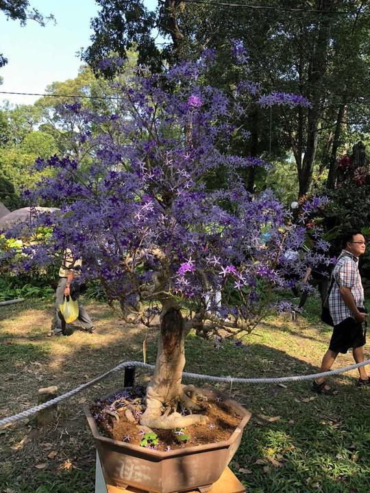 Mãn nhãn với kỳ hoa dị thảo tại Hội Hoa Xuân Tao Đàn - Ảnh 13.