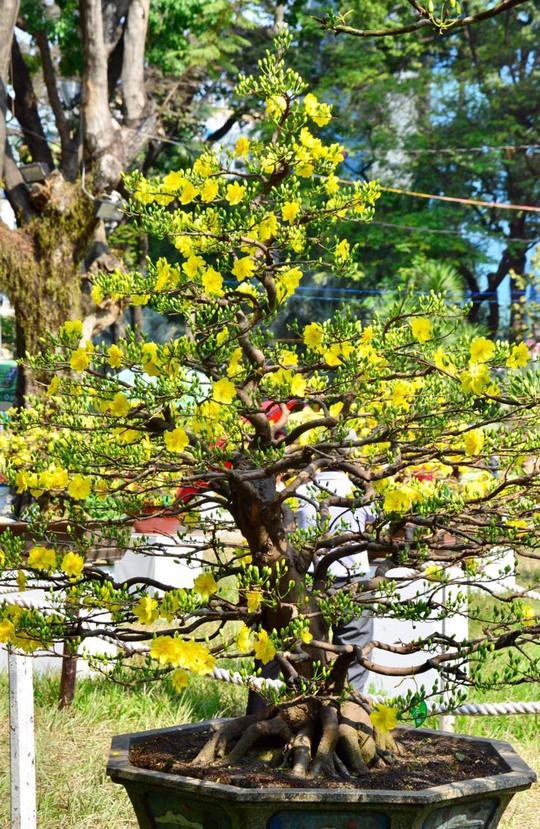 Mãn nhãn với kỳ hoa dị thảo tại Hội Hoa Xuân Tao Đàn - Ảnh 1.