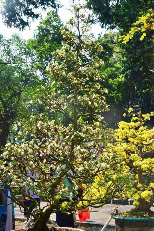 Mãn nhãn với kỳ hoa dị thảo tại Hội Hoa Xuân Tao Đàn - Ảnh 9.