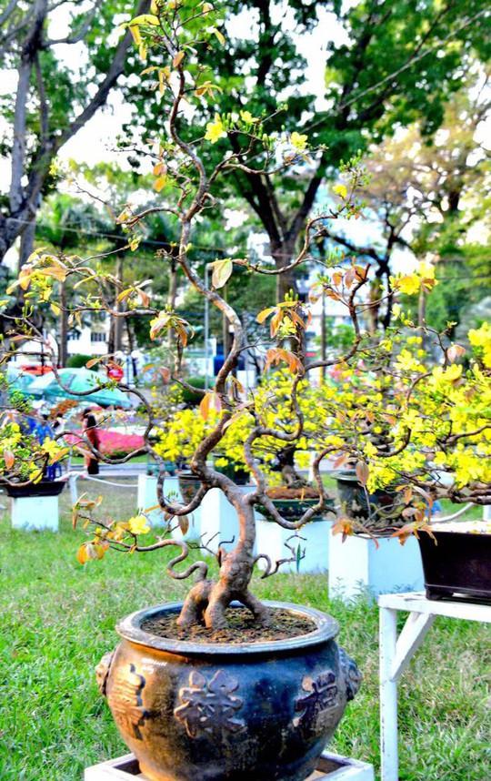 Mãn nhãn với kỳ hoa dị thảo tại Hội Hoa Xuân Tao Đàn - Ảnh 8.