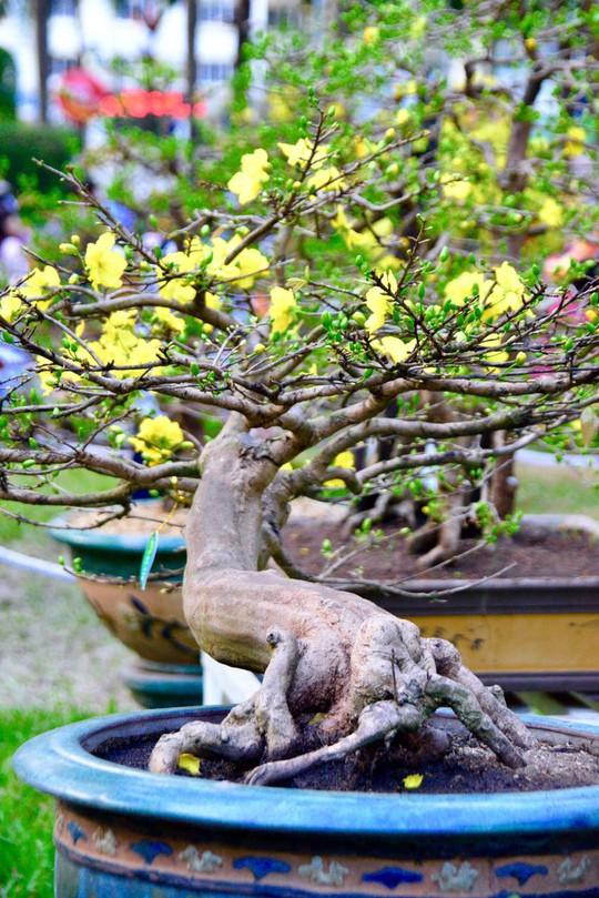 Mãn nhãn với kỳ hoa dị thảo tại Hội Hoa Xuân Tao Đàn - Ảnh 7.